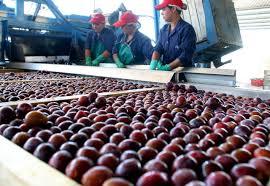 Mendoza exportó el primer contenedor de ciruelas deshidratadas a Dubai.
