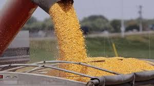 Incertidumbre local: en una jornada con poco volumen, qué precio se pagó por soja, trigo y maíz en Rosario.