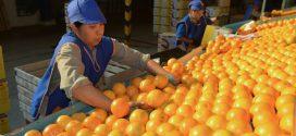 Citrus y Jugos: Ledesma volcó sus exportaciones a Medio Oriente, tras el bloqueo europeo