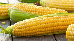 Las exportaciones mensuales de maíz son récord por segundo mes consecutivo.