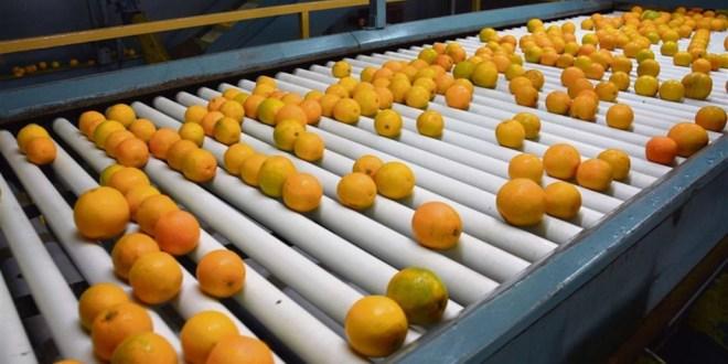 Ledesma reforzó su perfil exportador ante menor consumo local