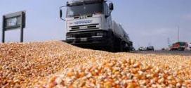 Los commodities agrícolas comienzan la semana con subas en los mercados.
