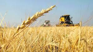 La soja y el trigo anotan nuevos máximos de hasta cinco años.