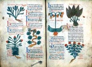Texto medieval sobre os usos medicinais de plantas