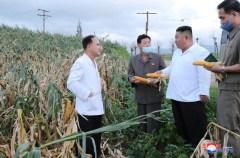 Kim Jong Un inspeciona fazenda arrasada por passagem de tufão em agosto de 2020. Crédito: KCNA.