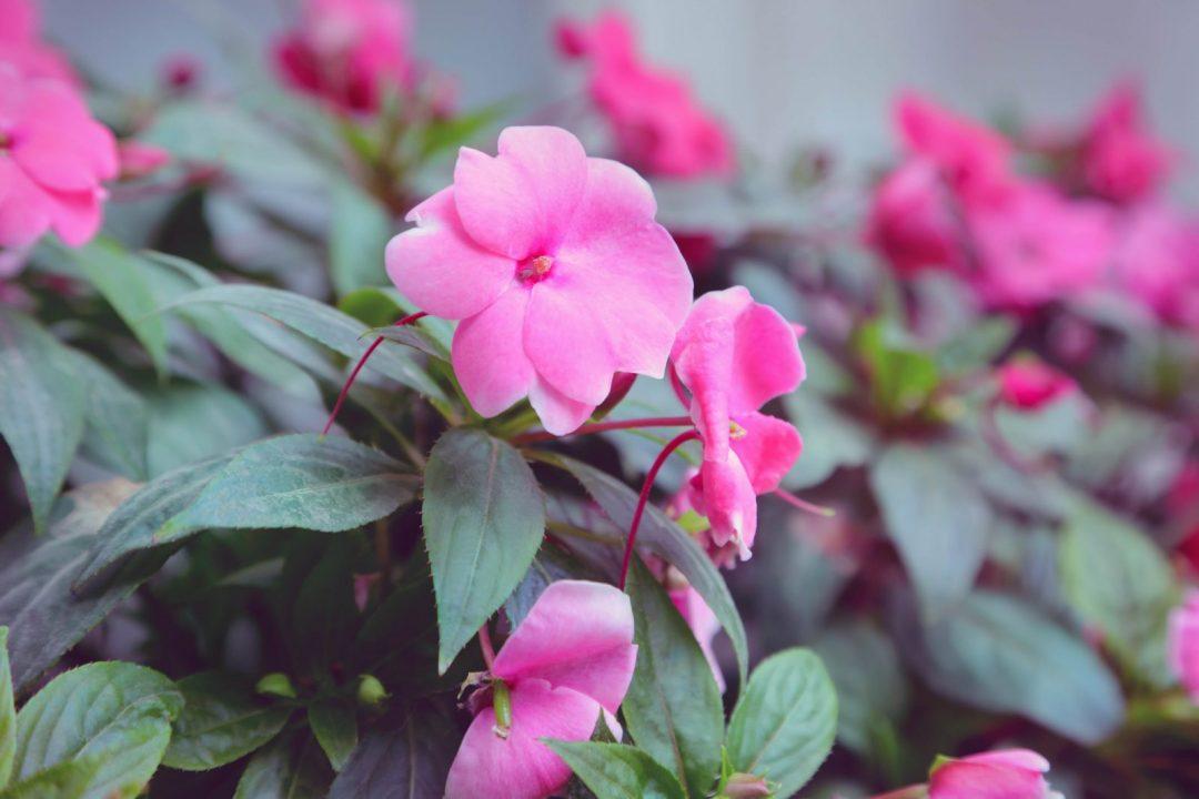 plantas que gostam de sombra