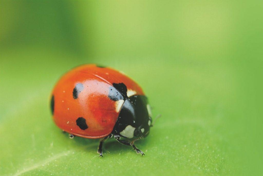 insetos contra pragas