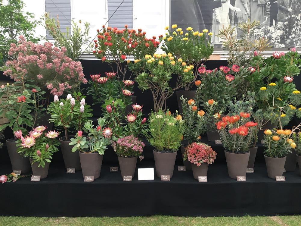 no chelsea flower show