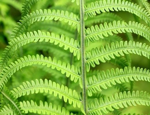 Dia Internacional do Fascínio pelas Plantas