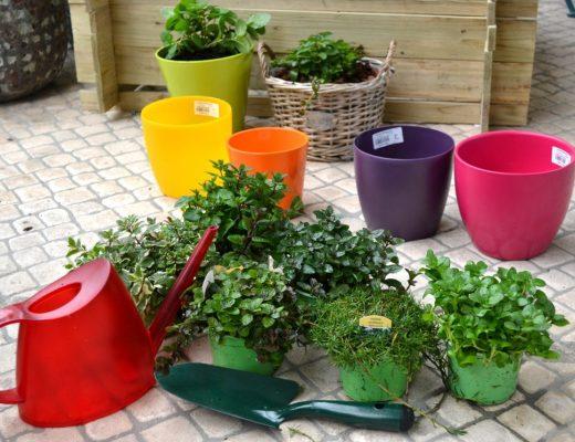 jardim de hortelãs