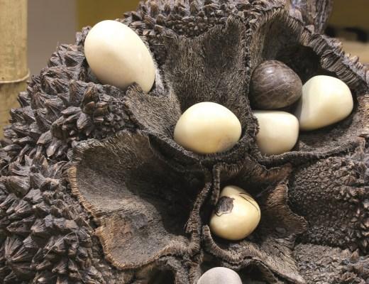 marfim-vegetal