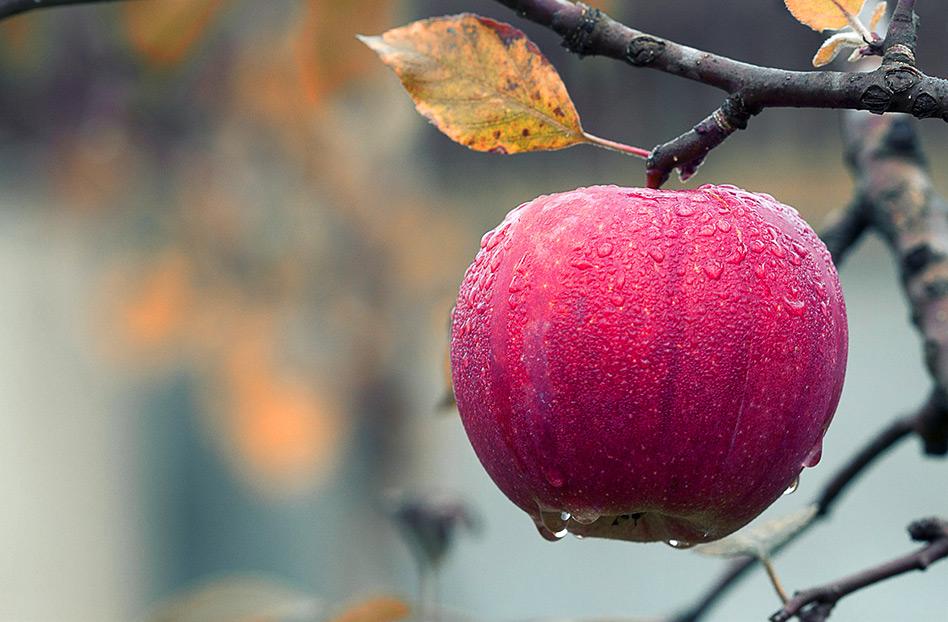 La Manzana: fruto perfecto