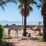 Marrakech: la ciudad roja