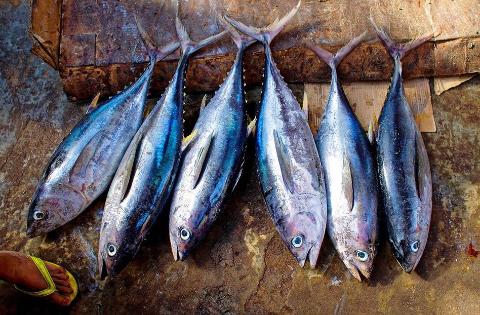 Dónde comprar pescado sustentable en línea
