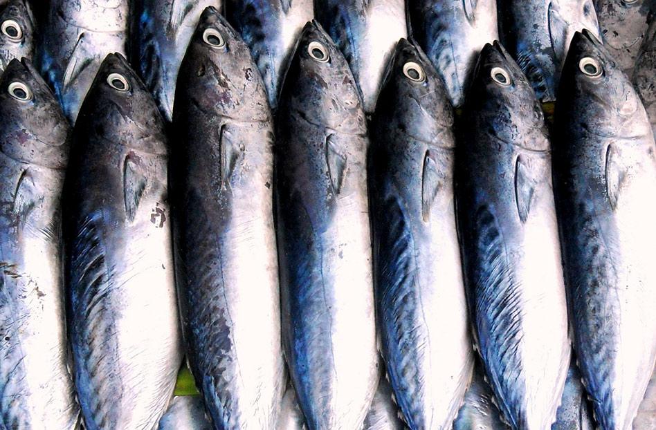 Cómo escoger pescado fresco