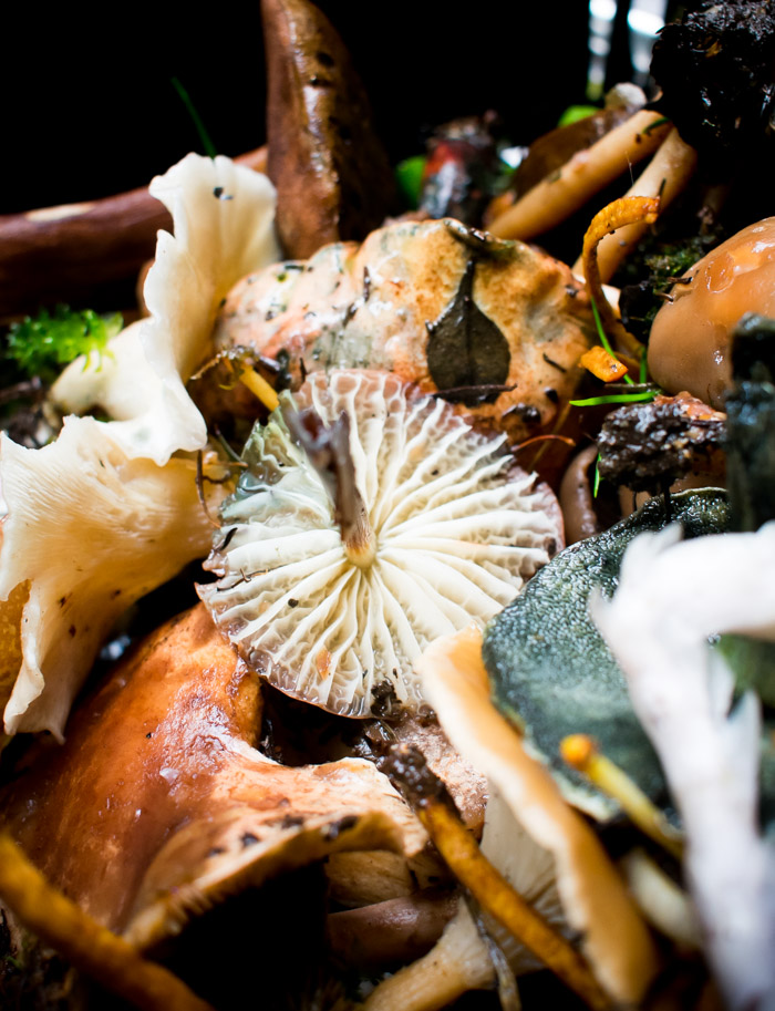 Cubo, un restaurante en el bosque cerca de la cdmx, temporada de hongos