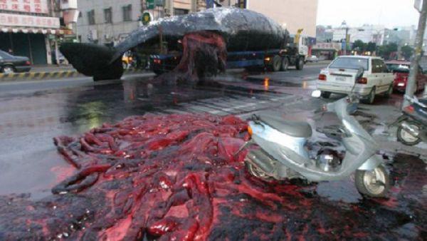 Explosión de ballena 4