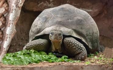 1-Tartaruga-Réptil-Carapaça.-Pixabay