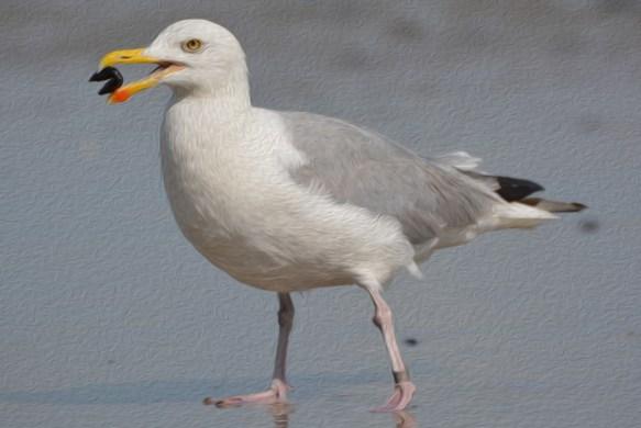 seagull-863723
