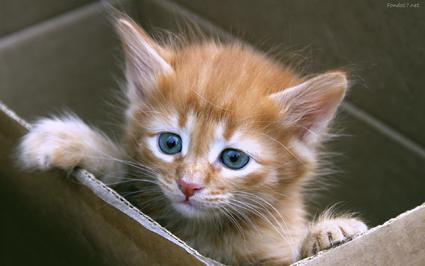 Las fotos de gatitos, de las más gustadas en las redes sociales.