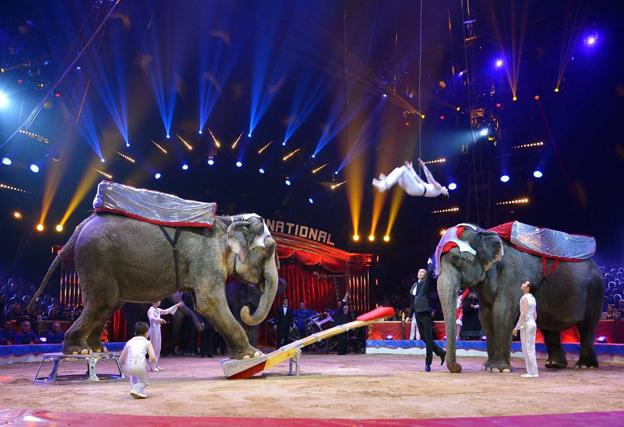 ¿Con elefantes o sin ellos?