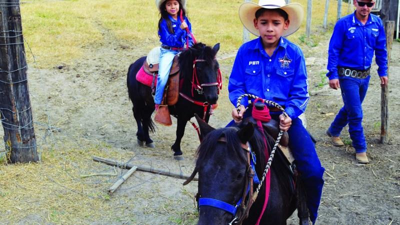 Pôneis entram para o mercado de equitação em Rondônia