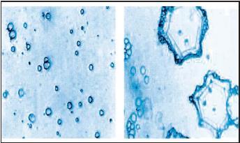 Partícula líquida o de hielo que forma parte de la nube