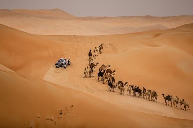 Despres e os camelos