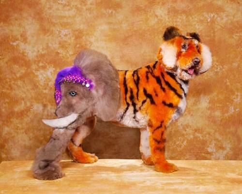 Exhibiciones caninas divertidas - ¿Tigre o Elefante?