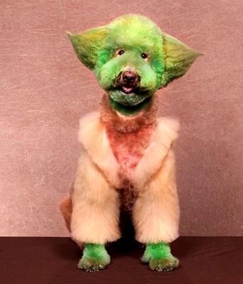 Exhibiciones caninas divertidas - Yoda