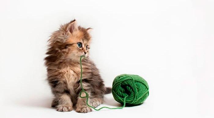 Las mascotas más famosas de internet.