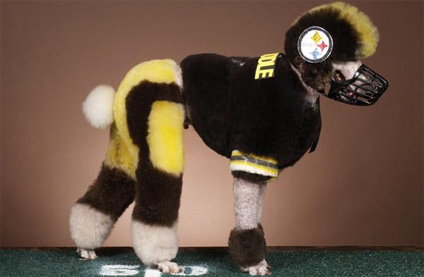 Exhibiciones caninas divertidas - Jugador de fútbol americano