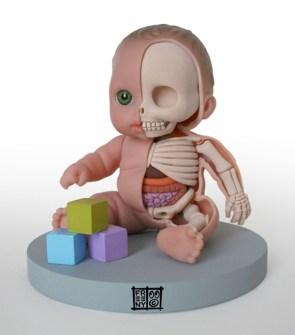 Anatomía Barriguitas