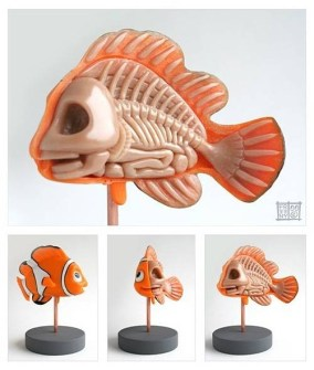 Anatomía Nemo