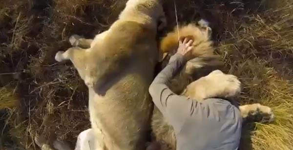 El abrazo de un hombre con leones grabado con la cámara GoPro