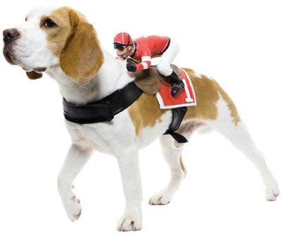 Disfraces para Mascotas en Halloween - Disfraces para perros con jinetes