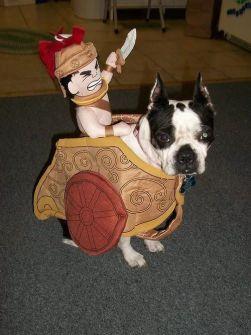 Disfraces para Mascotas en Halloween