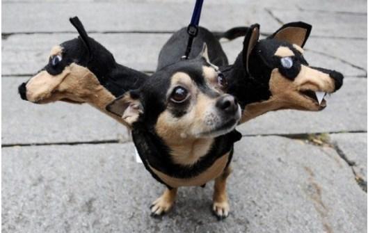 dDisfraces para Mascotas en Halloween