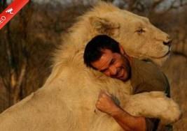 El Asombroso Abrazo de un Hombre con Leones Salvajes.