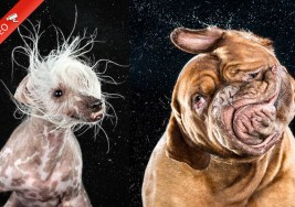 ¿Te gustaría ver a tus Mascotas en Slow Motion?