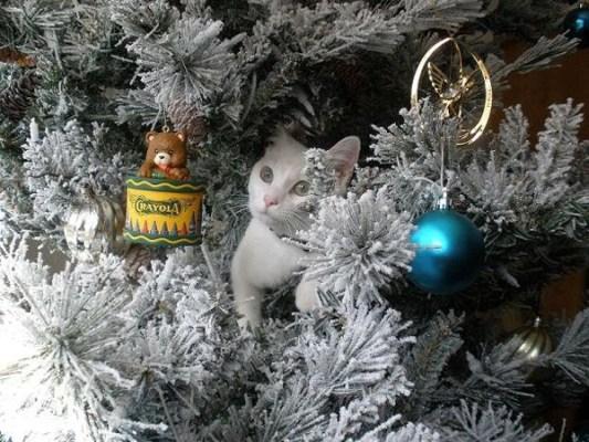 18 Felicitaciones de Navidad Creativas y Divertidas - Felicitaciones con mascotas
