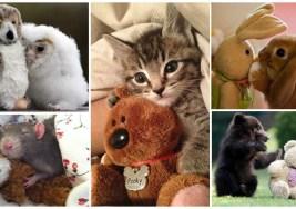 Mascotas con sus Peluches.