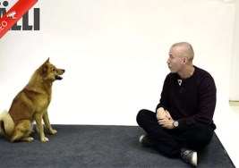 ¿Sabes Cómo reaccionaría tu Perro a Ladridos de Humanos?