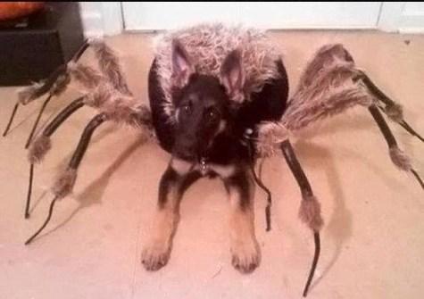 Mi Perro Araña