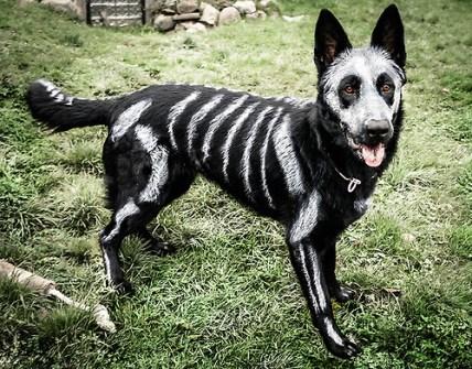 mi-perro-en-Halloween