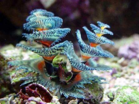 gusano-arbol-navidad