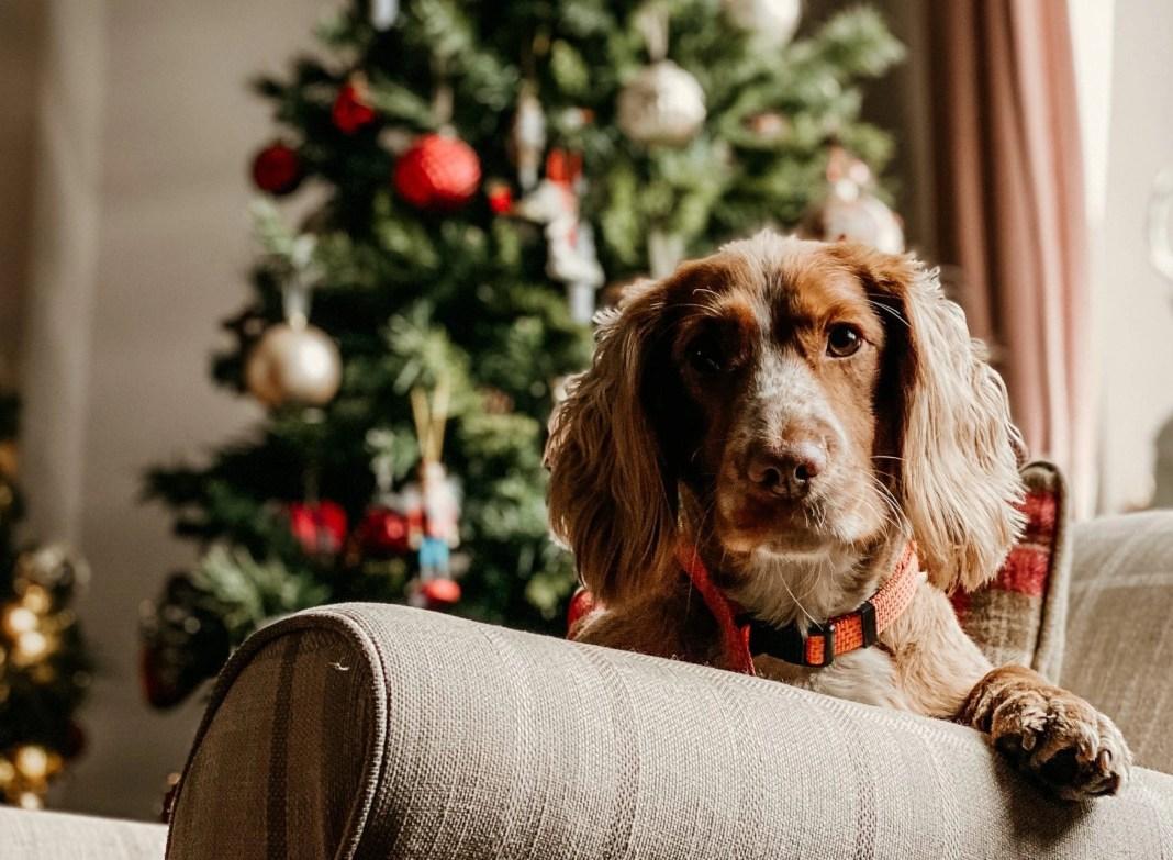brown dog on sofa chair
