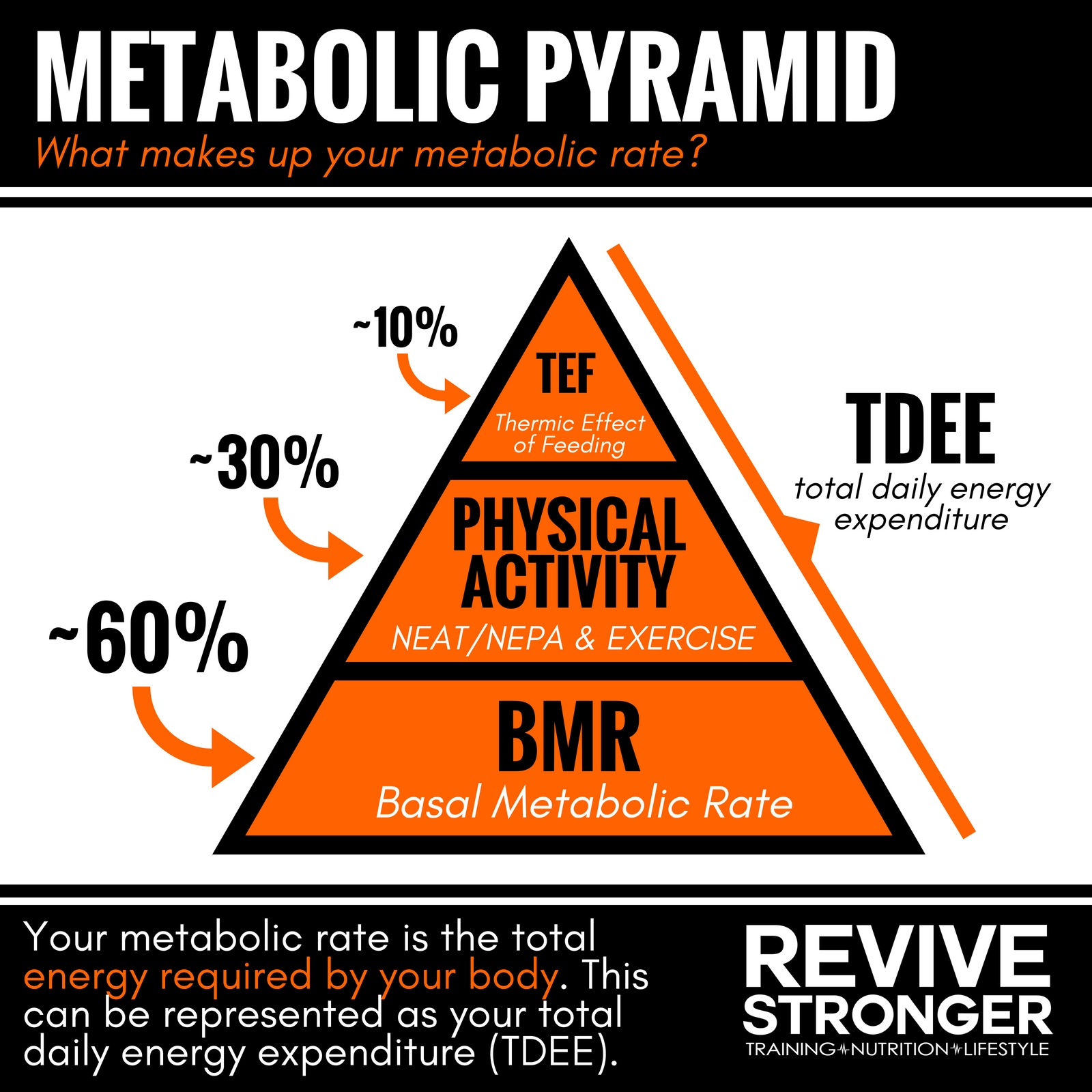Adaptive Thermogenesis How It Applies To Weight Loss And