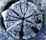 Growth and Decay