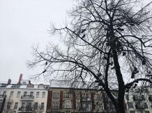 Travelguide Berlin: Unterwegs rund um den Kollwitzplatz